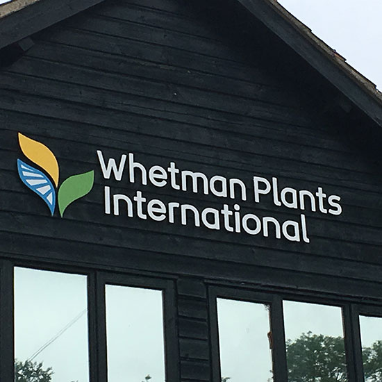 vinyl-raised-lettering-whetman-plants